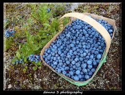 WildBlueberriesinaBasket
