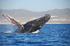 more whales